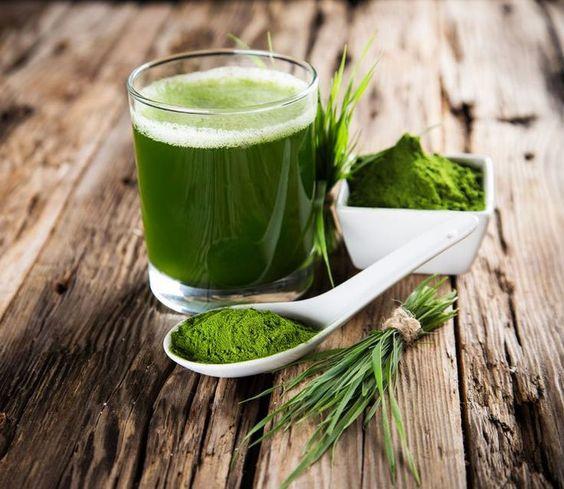 La Moringa: Beneficios y Propiedades del Árbol de la Vida 3