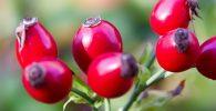 Escaramujo: 7 Beneficios a la Salud + Valor nutricional 9