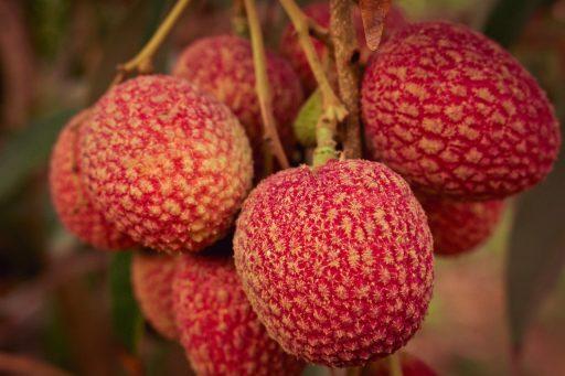 Fruta de Lichi: 8 Beneficios y sus Mitos resueltos 13