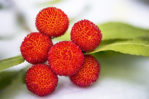Fruta de Lichi: 8 Beneficios y sus Mitos resueltos 12