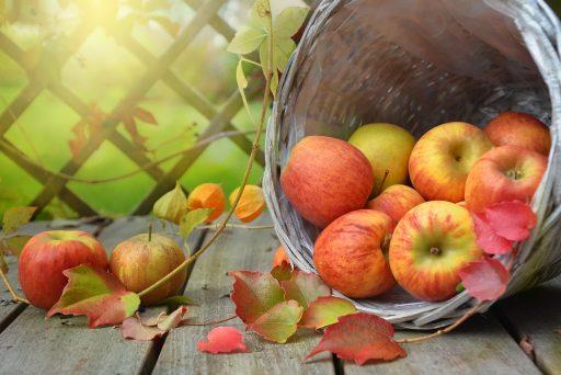 11 Tipos de Manzanas más presentes en el mundo 15