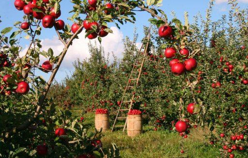 Manzana: 10 Beneficios y Propiedades Increíbles 8