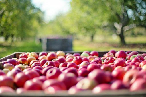 11 Tipos de Manzanas más presentes en el mundo 14