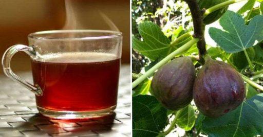 Té de Hojas de Higo para bajar de peso y más Beneficios 1